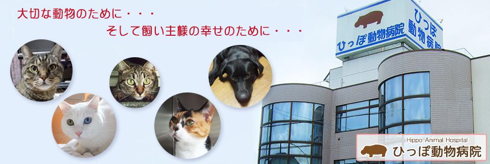 大切な動物のために。そして飼い主様の幸せのために。 ひっぽ動物病院